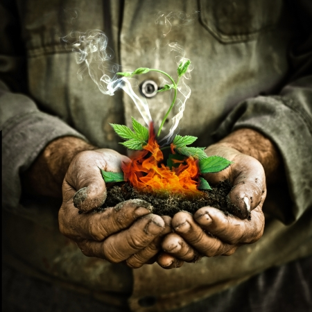 greenhouse effect: Green plant burning in man hands  Greenhouse effect and global warming concept