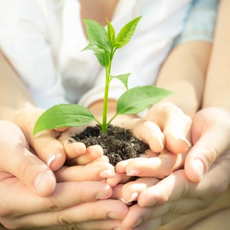 hoopt: Familie bedrijf jonge groene plant in handen. Ecologisch concept