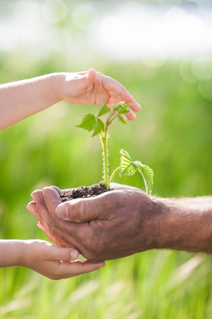 small plant: Human hands holding young plant against spring green background  Ecology concept