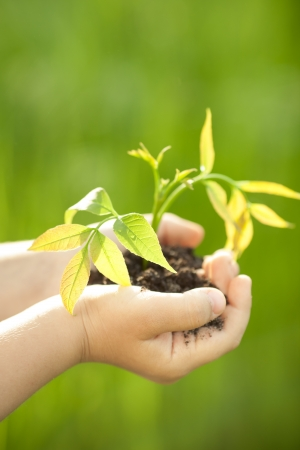children holding hands: Children s hands holding young plant against spring green background  Ecology concept