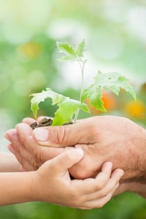 arbol de la vida: El viejo y el niño la celebración de arce joven contra el fondo verde primavera. Ecología concepto