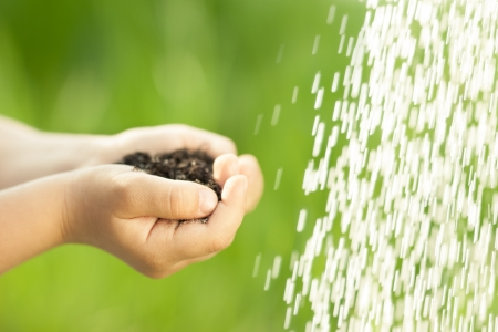earth handful: Children s handful of earth near pouring water against green spring background  Ecology concept