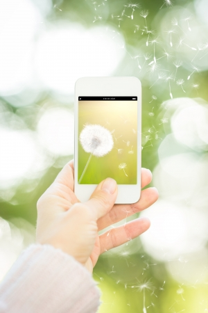 dandelions: Woman holding smartphone with flower against spring green background  Ecology concept