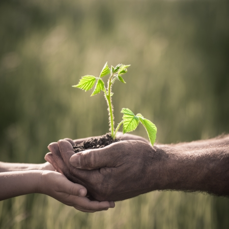 hope: Child and senior man holding green plant in hands  Ecology concept