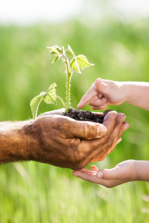 Child and senior man holding green plant in hands  Ecology concept