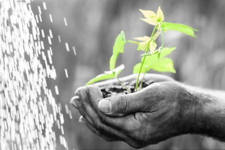 conservacion del agua: El viejo hombre que sostiene la planta verde sobre fondo blanco y negro Foto de archivo