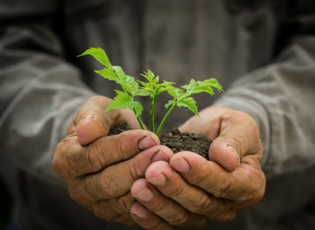 農家: 年配の男性人グランジ背景に対して手で若い緑の木を保持します。環境保護の概念