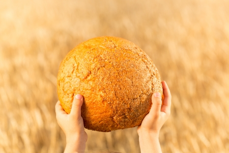 Homemade bread in hands against wheat autumn field background photo