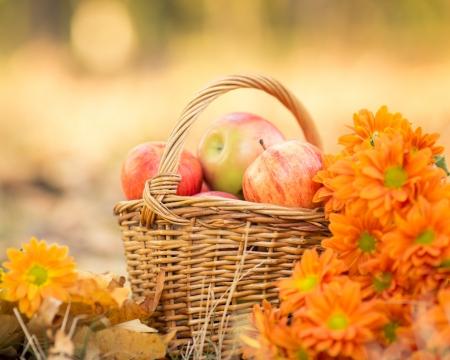jardines con flores: Cesta llena de jugosas manzanas rojas y flores en el jardín de otoño