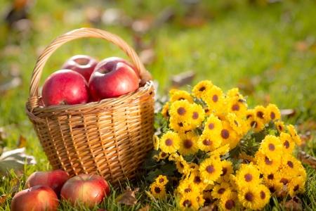 Kosz z czerwonych jabłek i kwiatów w plenerze jesienią zdrowego od