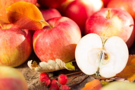 Fruits and vegetables in autumn outdoors  Thanksgiving holiday concept photo