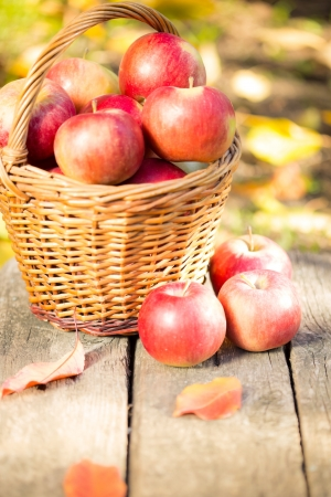 Basket full of red juicy apples scattered on wooden table in autumn garden Stock Photo - 22021860