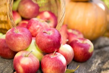 Obst und Gemüse im Herbst im Freien Thanksgiving Konzept