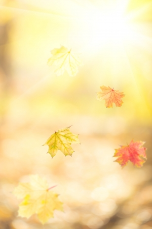 Falling autumn maple leaves against yellow sunny