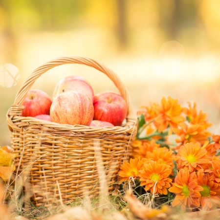 Basket with red apples and flowers in autumn outdoors  Healthy eating concept photo