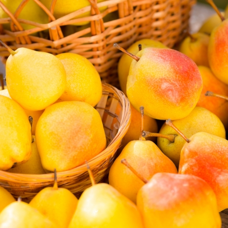 Ripe yellow pears in autumn outdoors  Healthy eating concept