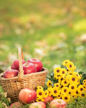 Basket with red apples and flowers in autumn outdoors  Healthy eating concept Stock Photo