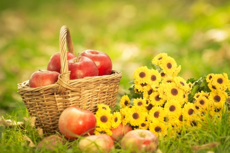 Basket with red apples and flowers in autumn outdoors. Healthy eating concept photo