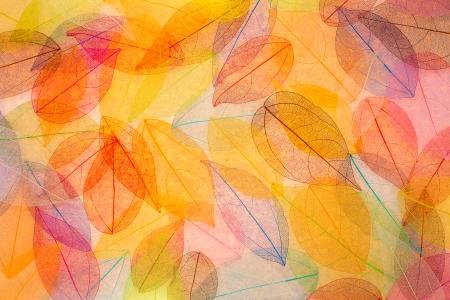 抽象的な秋の背景。美しい葉のテクスチャ 写真素材