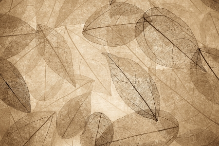 Abstract autumn background. Beautiful leaves texture photo