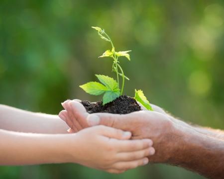 manos entrelazadas: Senior hombre y el bebé que sostiene la plántula en las manos contra el fondo verde primavera. Ecología concepto