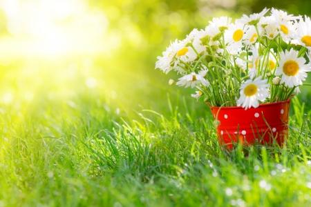 Beautiful bunch of spring flowers in red bucket Zdjęcie Seryjne