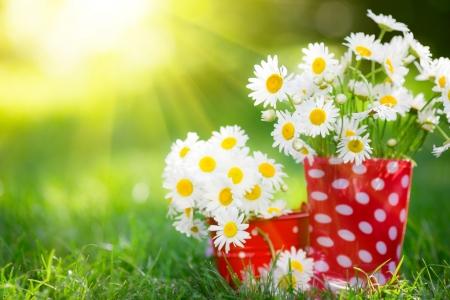 Hermoso ramo de flores de primavera en las botas de goma roja Foto de archivo - 25222344