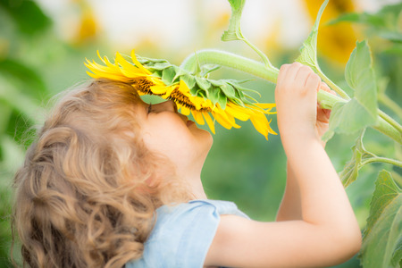 Happy child smelling beautiful sunflower outdoors in spring field Standard-Bild