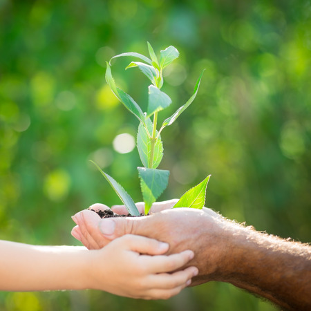 Pflanzen: Älterer Mann und Baby hält junge Pflanze in der Hand gegen Feder grünen Hintergrund. Ökologie-Konzept