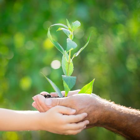manos: Senior hombre y el bebé que sostiene la plántula en las manos contra el fondo verde primavera. Ecología concepto