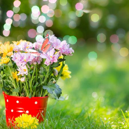 빨간색 양동이에 봄 꽃의 아름 다운 무리 스톡 콘텐츠