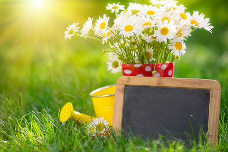 Beautiful bunch of spring flowers and blackboard blank in grass Stock Photo - 25897436