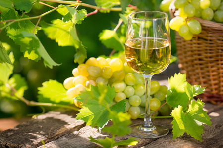 White wine in glass, young vine and bunch of grapes against green spring background photo