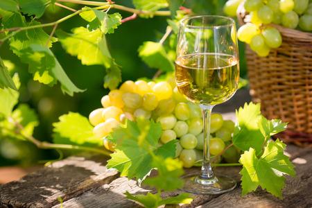 Witte wijn in glas, jonge wijnstok en tros druiven tegen de groene voorjaar achtergrond