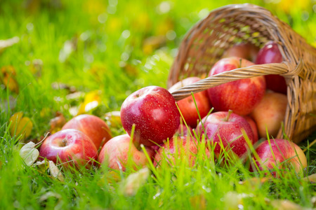 Fruits and flowers in autumn outdoors photo