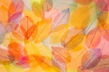 秋の背景。紅葉のテクスチャ