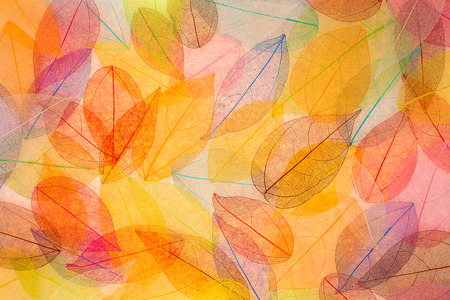 backgrounds: Autumn background. Fall leaves texture