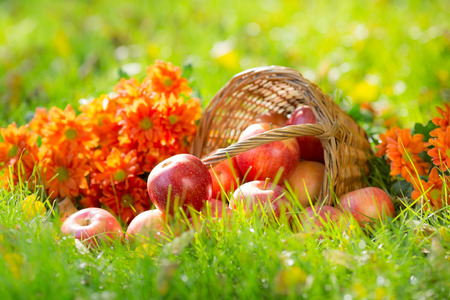 Fruits and flowers in autumn outdoors. Thanksgiving holiday concept photo