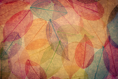 colored: Autumn background. Fall leaves texture