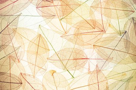 Herfst achtergrond. Herfstbladeren textuur Stockfoto