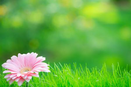 Spring background - flower in grass