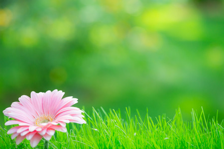 Spring background - flower in grass