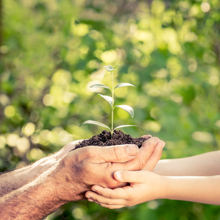 Senior man and baby holding young plant in hands against spring green background. Earth day concept Stockfoto
