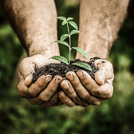 年配の男性人春の緑の背景の手で若い植物を保持します。生態学の概念