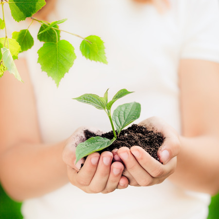 hands holding earth: Child holding young plant in hands against spring green background. Ecology concept. Earth day