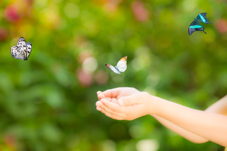 butterfly in hand: Children hands and flying butterfly against green spring background. Ecology concept