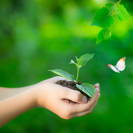 earth friendly: Child holding young plant in hands against spring green background. Ecology concept. Earth day