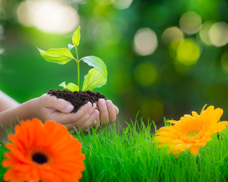Young plant in hands against beautiful green spring blurred background. Border from grass and flowers. Holiday Earth day concept