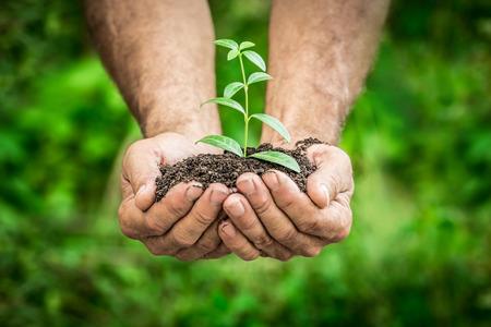 erde: Älterer Mann, junge Pflanze in den Händen gegen grünen Hintergrund Frühjahr. Ökologie-Konzept