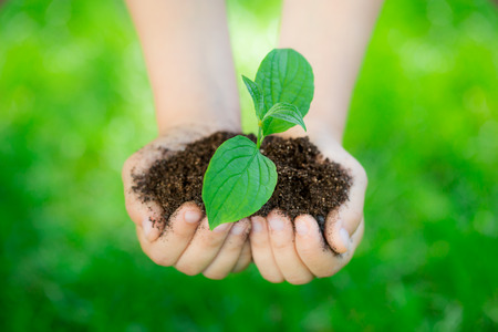 Young green plant in hands against beautiful spring blurred background. Holiday Earth day concept
